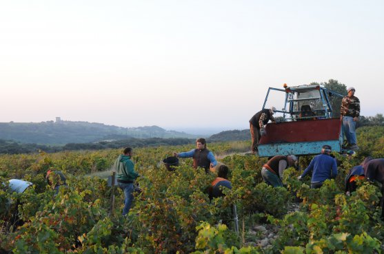 2013 Harvest – Report and perspectives