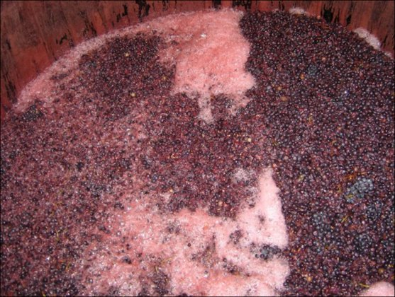 Fermenting process - Indigeneous Yeasts