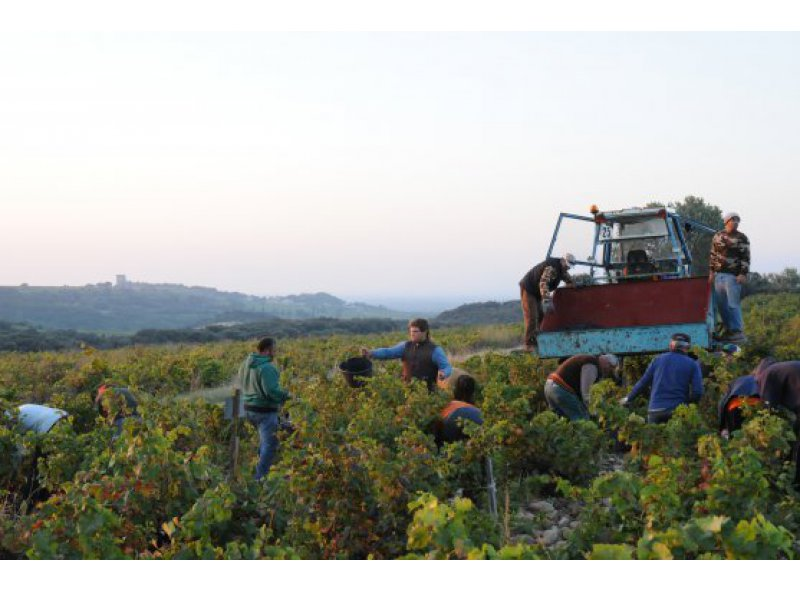 Vendanges 2013 - Bilan et perspectives