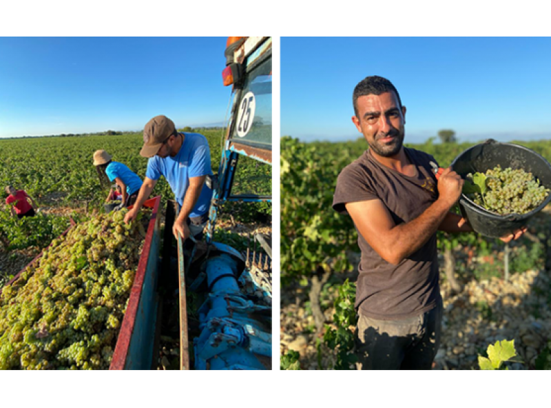 Harvest 2020 : a great vintage !