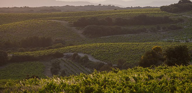 View of the Côtes du Rhône plots from the Domaine